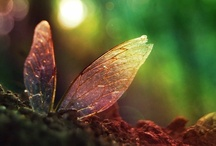 A Fairy World