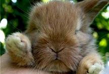 Easter - Húsvét