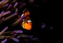 Underwater Scenes / Dive in and explore breathtaking images of our deep seas and its inhabitants.