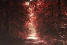 Paysages et lumières d'automne / Communauté GEO / L'automne est là ! Champignons et châtaignes tapissent les sols pendant que les forêts revêtent leurs couleurs chatoyantes.