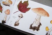 Biology Illustrations & Posters