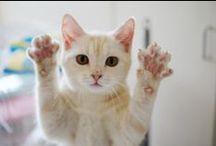 CATS / MEOW / by Elmira
