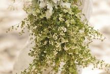Wedding Daze / Wedding ideas / by Marilyn Winch