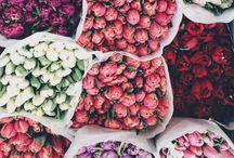 •Flowers•