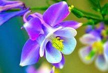 Sonnenblumen, Blumen und Bluemlis / Die Natur kann mit Schönheit sehr verschwenderisch sein ... Sonnenblumen, Blumen und Bluemlis Bei einer gelernten Floristin, die etliche Jahre Ihr eigenes Geschäft geführt hat, bleibt auch über Jahrzehnte hinweg der Faible für Blumen erhalten und diese Blumenbilder sind einfach sehenswert! Besuchen Sie unsere Homepage sunshine-flower.de und Sie finden dort noch etliches mehr ...