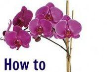 Blumen- und Pflanzen Ratgeber / Hinter diesen Pins finden Sie nützliche Ratgeber für die Blumen- und Pflanzenpflege