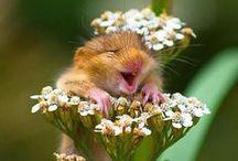Blumen sind funny / Blumen machen Spaß oder Humor ist wenn man/frau trotzdem lacht!