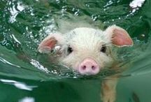 Piggies / by all about the cozy