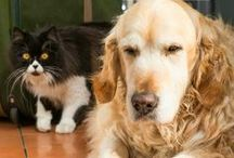 Pet Love / All about pets - tips, advice, etc / by Kecia (Southern Girl Ramblings)