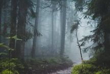 Trees - magic in there / by Daniellap. Biasevich