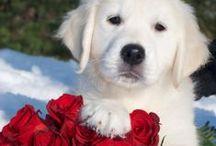 Cute Furry Fuzzy Animals / We love furry fuzzy cute animals as much as we love flowers! / by Flower Muse