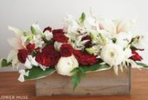 Winter Wedding Flowers / Our favorite flowers for winter weddings! Check out our other picks: http://www.flowermuse.com/wedding-flowers/winter-wedding-flowers.html / by Flower Muse