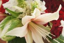 Holiday Flowers / Our favorite holiday flowers and design inspiration! / by Flower Muse