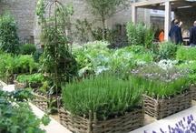 Alternative living - gardening/balanced lifestyle / by Wendell McCarthy