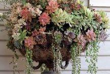 Gardening & Landscaping / by Janice Thackston Briggs
