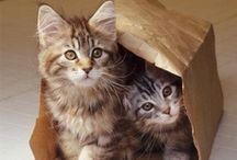 Here, KittyKitty! / by Mary Feltman