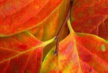 Leaves~Hojas / by Martha Elizabeth Pailos
