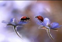 Butterflys ~ Dragonflys ~ Ladybirds / Ladybird Ladybird Fly away Home...  / by Mary Donnelly