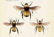 Abuzz with Bees, Honey etc.