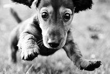 Animals / by Michele Weisbecker