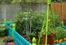 Garden & Outside ideas / by Audrey Shantz