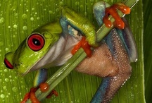 Frogs / by Sherry H