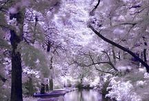 Purple! / All things purple.