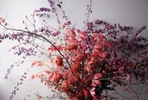 Home   Flowers & Greens