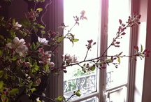 flower & leaf - Spring / We'll be able to see these flowers somewhere in Paris !