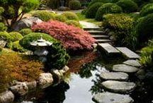 In the Garden / by Jessi Valdez