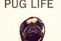 Pug Life / by Melissa Hahn