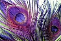 Inspired Purple  / by Hannah Johnson