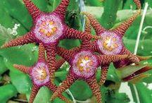 Weird & wonderful flowers & plants
