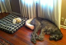 DOGS & CATS LIVING TOGETHER
