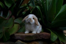 Bunny Lub / by Candice
