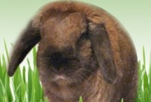 Bunny's Blog / A blog about animals and animal-related causes / by Vicki Cook