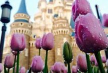 Enchanted and Magical