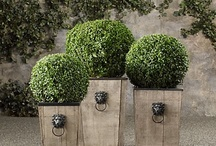 BOXWOODS / by Parker Kennedy