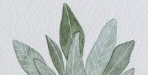 Leaves & Trees / Images, facts and representations of leaves and trees from around the world.