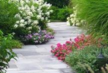 gardening / by Gail Dazey