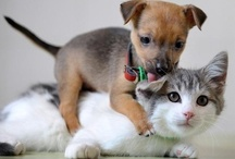 Dogs and Cats / by Latrica Bochesa Gomez