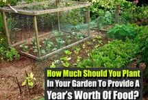 SURVIVAL | SUSTAINABLE LIVING / NATURAL LIVING | SUSTAINABLE LIVING | LIVING OFF THE GRID