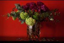 Flora/Flowers/Blumen/Fiore / Pflanzen und Blumen
