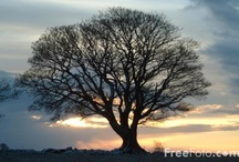 trees are great / by Janet Ryan