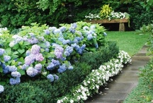 Tips/ Projects For My Yard and Garden / by Shelly Janss Condie