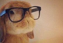 Rabbitry / by Linda Spahr