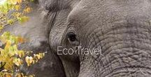 Elegant Traveller | Eco Travel / Ethical travel is a key consideration for any luxury traveller. Seek the best safaris for conservation, discover luxury resorts that give back to the local community or find the most nurturing spas that use eco-conscious ingredients. Luxury travel reveals the beauty of our planet and here, we hope to help protect it.