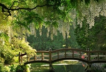 Glorious Gardens / Celebrating Mother Nature in all her glory! / by Penny Scott