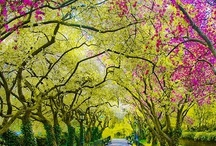 SPRING HOLIDAYS / RENEW AND REFRESH SPRING FORWARD / by Marjean LeMar-McMahon