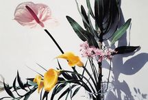 Flores & Matinhos